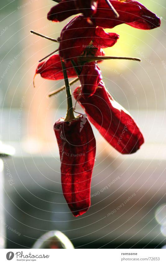 red hot.. rot getrocknet Kräuter & Gewürze Gegenlicht lecker Gesundheit trocken Scharfer Geschmack