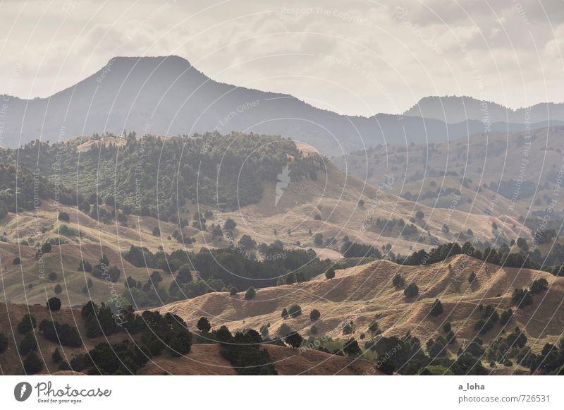 Chase This Light Umwelt Natur Landschaft Pflanze Urelemente Erde Himmel Wolken Horizont Sommer Schönes Wetter Baum Gras Sträucher Wiese Wald Hügel Felsen Gipfel