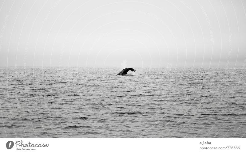 down deep Natur Tier Urelemente Wasser Wassertropfen Himmel Horizont Wellen Meer Wildtier Wal Pottwal 1 ruhig Fernweh rein Ferne Neuseeland Walbeobachtung