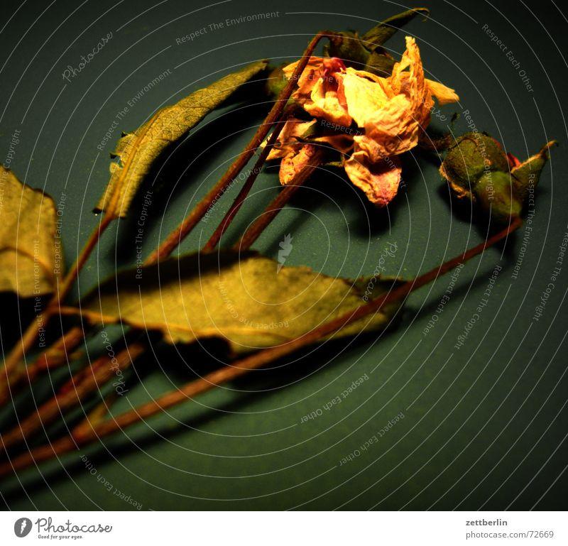 Blume aus Hamburg Ferien & Urlaub & Reisen Blatt Blüte Tee Stengel Stab Herbarium