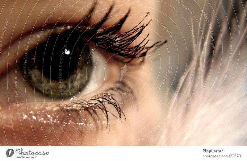 realising Mensch schön Gesicht Auge kalt braun glänzend Perspektive Aussicht weich Feder beobachten Klarheit zart entdecken Schminke