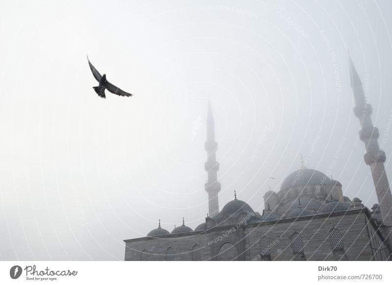 Tiefflieger im Morgennebel blau weiß Einsamkeit Ferne schwarz dunkel kalt grau Religion & Glaube fliegen Vogel Fassade Nebel trist fantastisch historisch