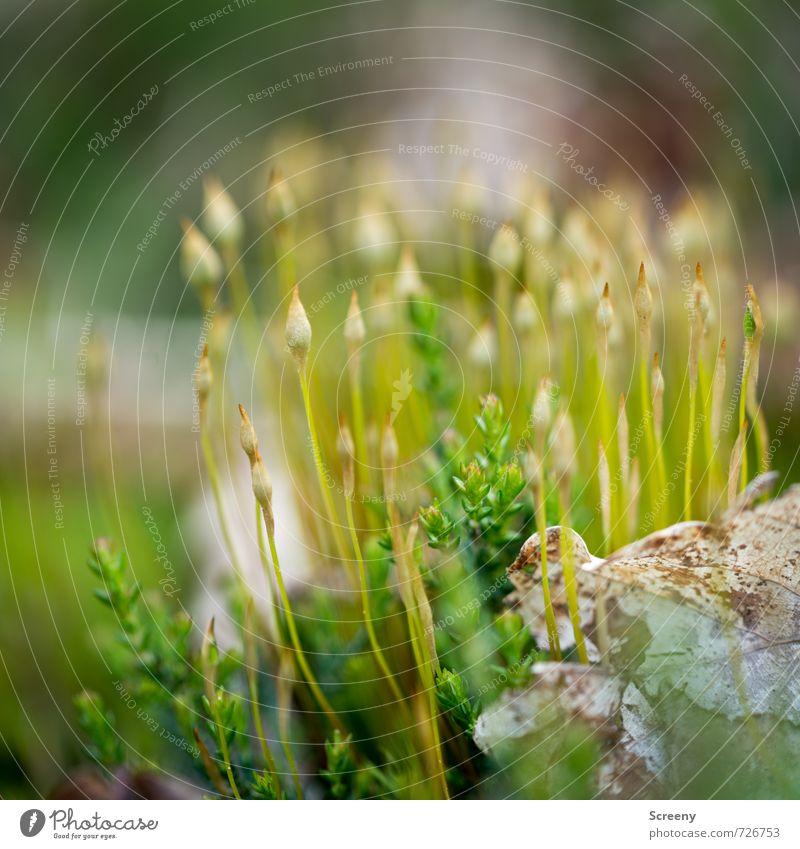 Kaffeefahrt ins Grüne Natur Pflanze Frühling Moos Wald Wachstum dünn klein grün Frühlingsgefühle Gelassenheit geduldig ruhig Zusammenhalt Farbfoto Außenaufnahme