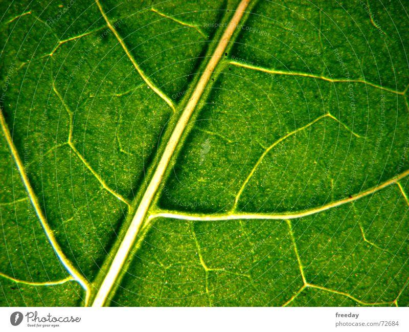 ::: Saftiges Grün 1 ::: Hintergrundbild Baum Romantik mehrfarbig nah Photosynthese reif grün Blatt Götter Pflanze hellgrün Gefäße Niedersachsen Urwald Botanik