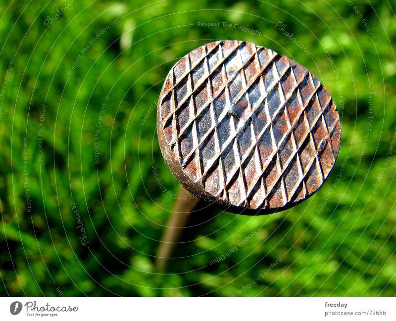 ::: Marienkäfer Landeplatz ::: Natur grün Pflanze Sommer Haus Umwelt Wiese Wand Holz grau Gras klein Gebäude Metall Park Erde