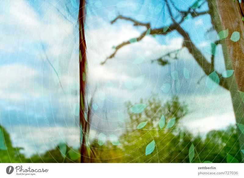 Apfel hinter Gardine Himmel Natur schön Landschaft Wolken Haus Fenster Umwelt Stil Garten Park Wetter Wohnung Raum Häusliches Leben Klima