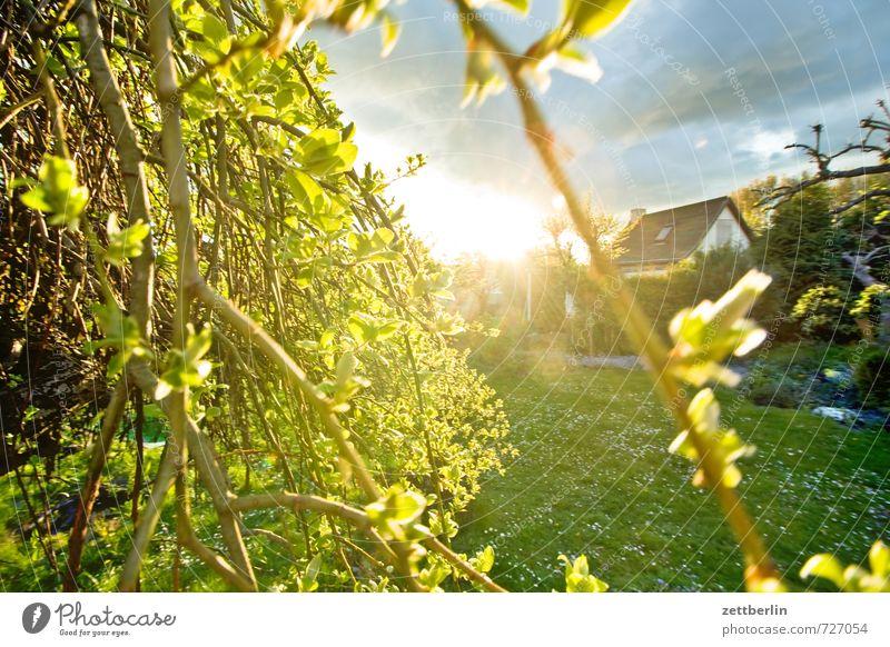 Die Sonne. Sie geht unter. Natur Baum Landschaft Haus Umwelt Wiese Garten Park Wetter Zufriedenheit Sträucher Klima Schönes Wetter Ast Lebensfreude Rasen