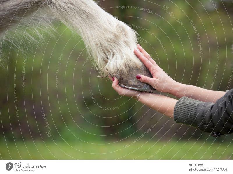 gib Hüfchen! Freude Zufriedenheit Erholung Reitsport Reiten Mensch Junge Frau Jugendliche Erwachsene Hand Finger 1 Natur Tier Nutztier Pferd Pfote Streichelzoo