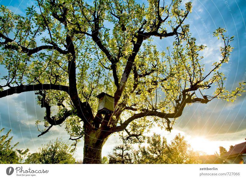 Vogelhaus bei Sonnenuntergang Blühend Blüte Frühling Garten Himmel Blütenknospen Blattknospe Natur Wachstum Wolken Wetter Klima Abend Feierabend Schrebergarten