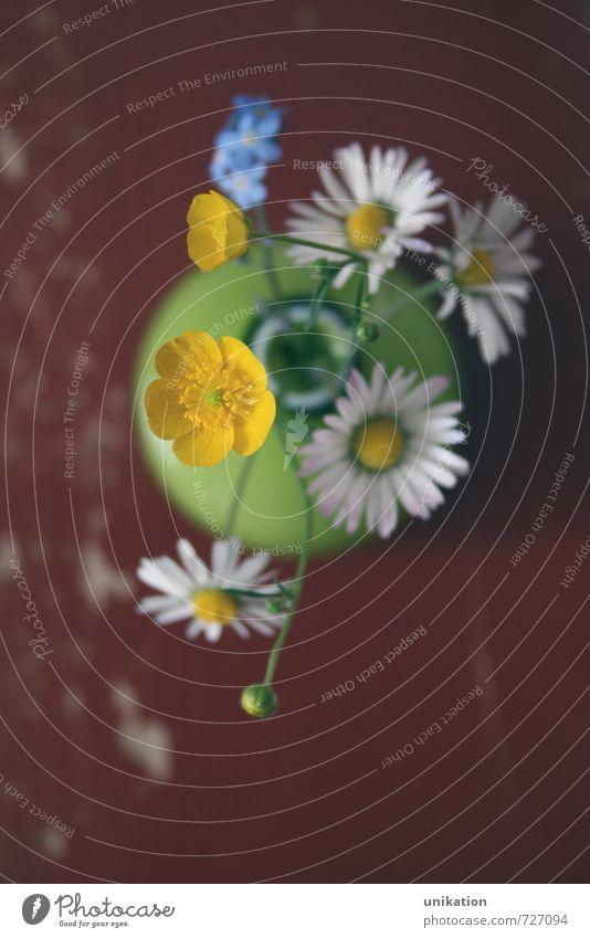Wiesenblümchen Häusliches Leben Wohnung Dekoration & Verzierung Tisch Muttertag Natur Pflanze Frühling Sommer Blume Blüte Gänseblümchen Blühend Duft
