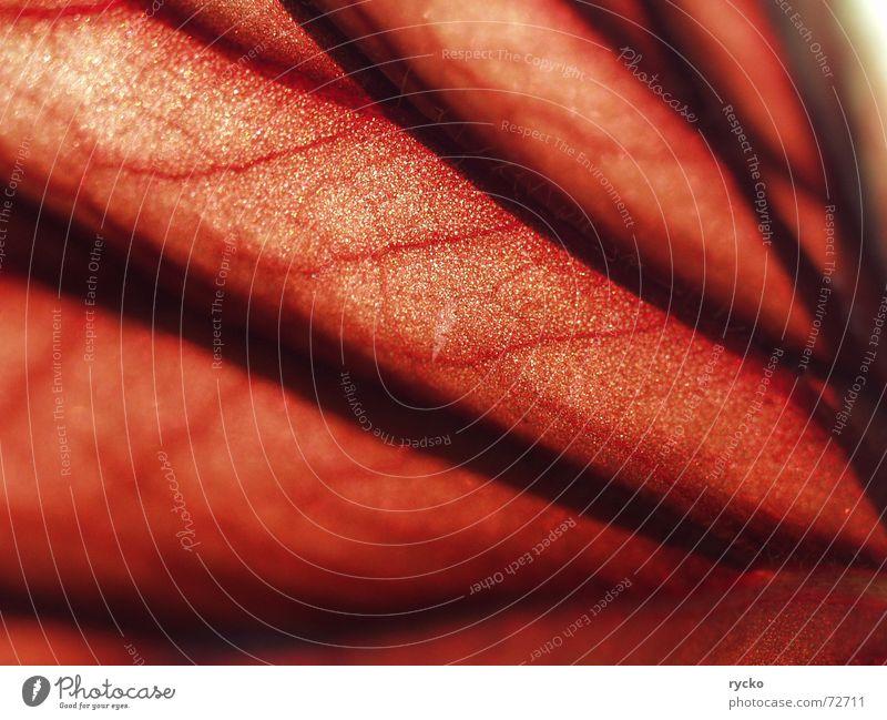 Lebensader rot Gefäße Blatt Pflanze Lichtspiel Blut Kristallstrukturen Kontrast