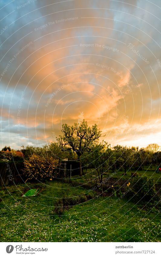 Drama Himmel Wolken Wetter Klima Abend Feierabend Garten Schrebergarten Kleingartenkolonie Hecke Nachbar Wiese Rasen Sportrasen Gras Baum Sträucher Weitwinkel