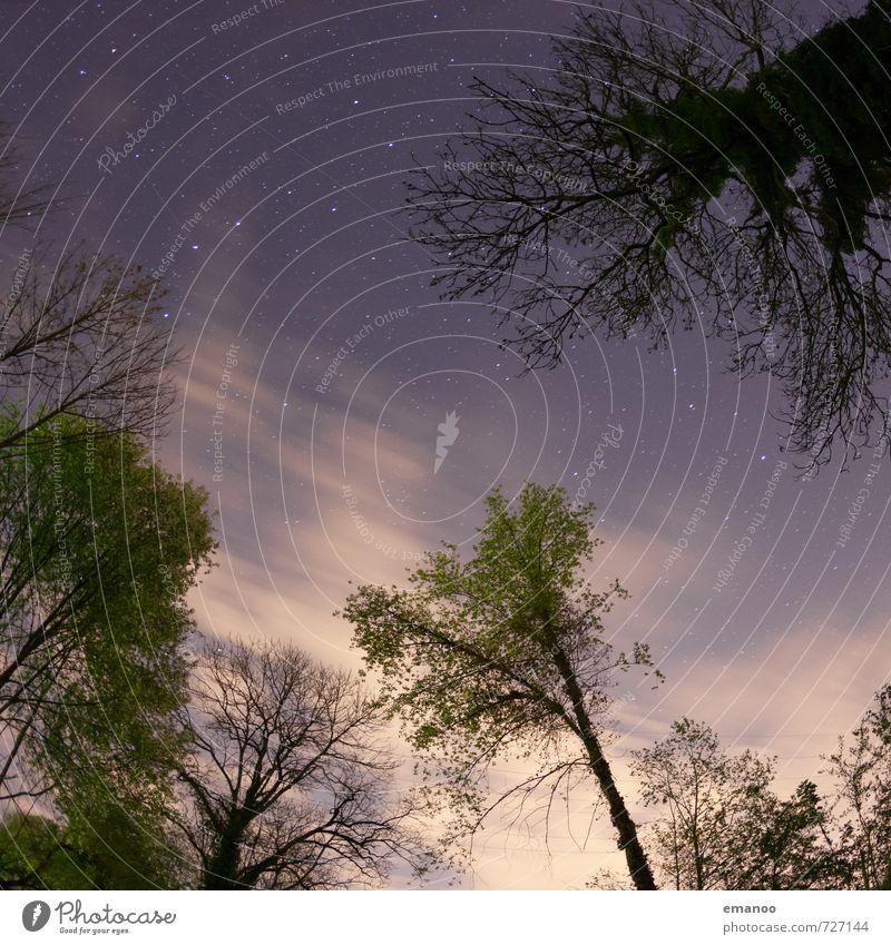 Nachtlichtung Ferien & Urlaub & Reisen Ferne Freiheit Sommer Natur Pflanze Himmel Wolken Nachthimmel Stern Wetter Wind Baum Wald Wachstum dunkel Waldlichtung