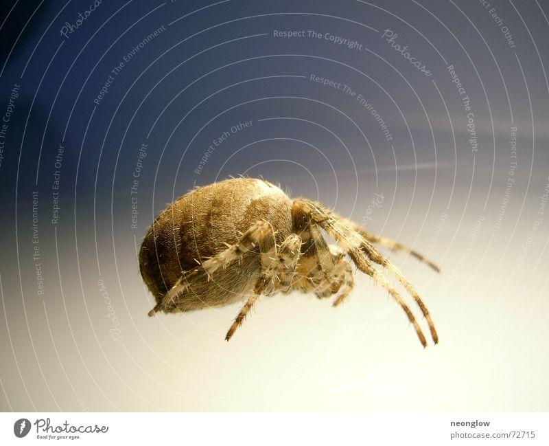 Garten-Modell Beine braun Angst gruselig Spinne krabbeln ducken