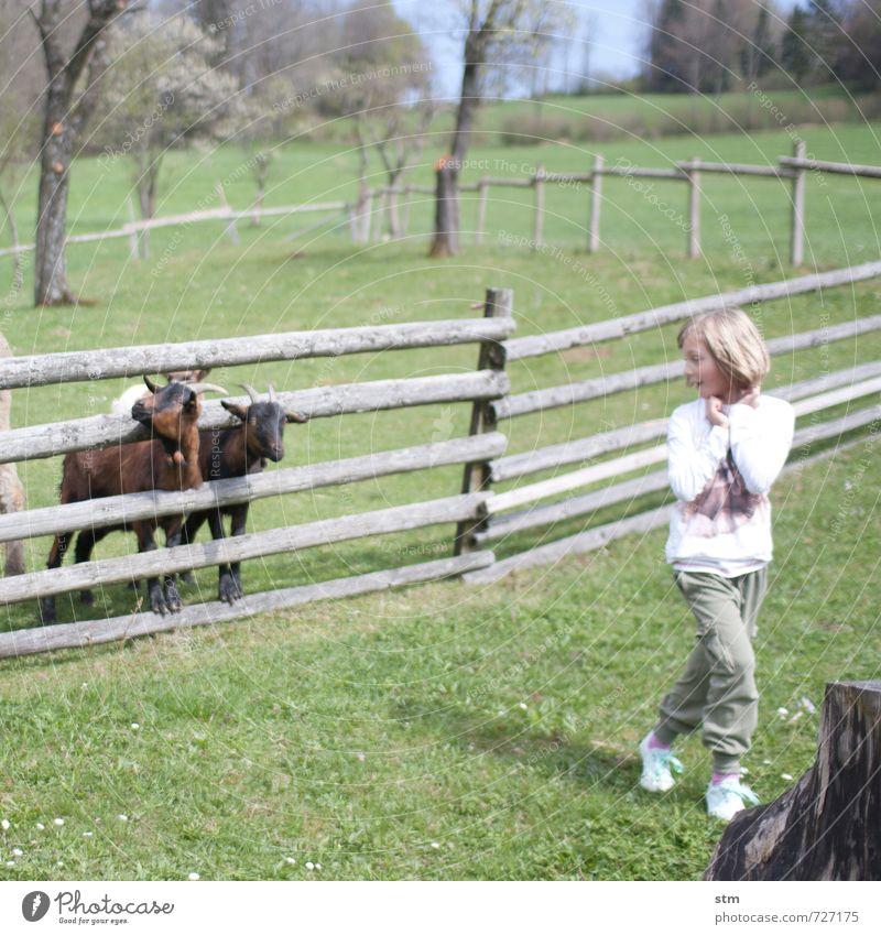 abenteuer bauernhof Mensch Kind Natur Ferien & Urlaub & Reisen Sommer Mädchen Tier Leben Wiese feminin lustig Gras Spielen Garten Häusliches Leben Kindheit