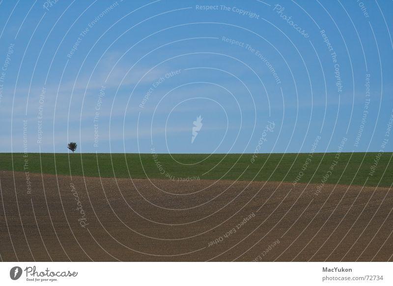 Bäumchen Himmel Baum Ferne Farbe Wiese Landschaft Feld Horizont 3