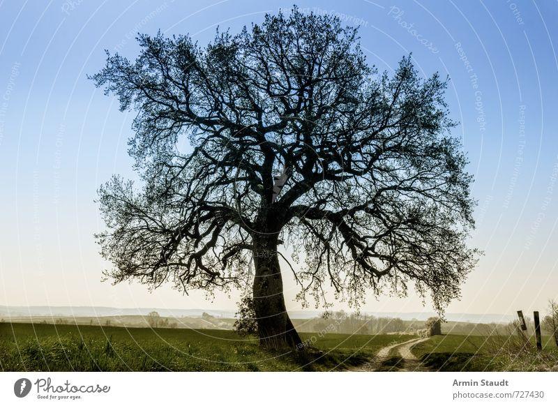 Linde in dunstiger Landschaft Himmel Natur Ferien & Urlaub & Reisen blau schön grün Sommer Baum Einsamkeit dunkel Umwelt Leben Frühling natürlich Stimmung