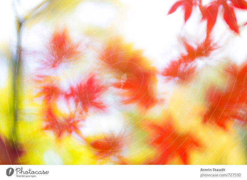 Hintergrund mit verschwommenen Herbstblättern Natur Tier Schönes Wetter Wind Pflanze Baum Blatt Park glänzend leuchten verblüht ästhetisch gelb rot Stimmung