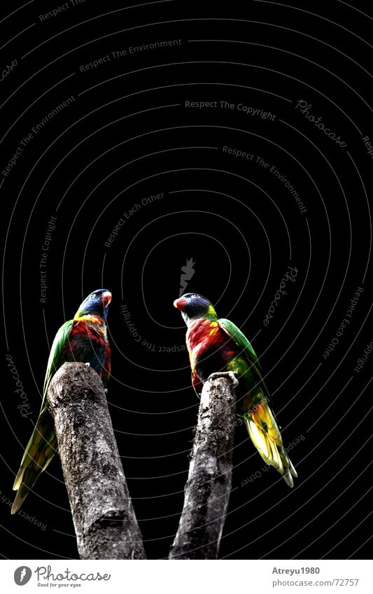 Vogel-V fliegen Feder Ast Urwald Baumstamm Schnabel Papageienvogel