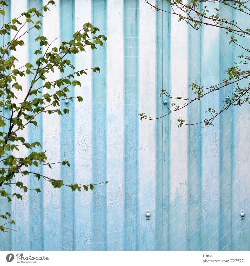 Greenwashing Frühling Baum Grünpflanze Mauer Wand Blech Wachstum blau grün Bewegung Partnerschaft Design entdecken Gelassenheit Zufriedenheit Leichtigkeit