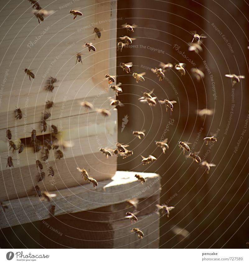 volkstanz Sommer Tier Wärme Holz natürlich fliegen Häusliches Leben wild authentisch Zeichen Völker rennen Biene machen nachhaltig stachelig