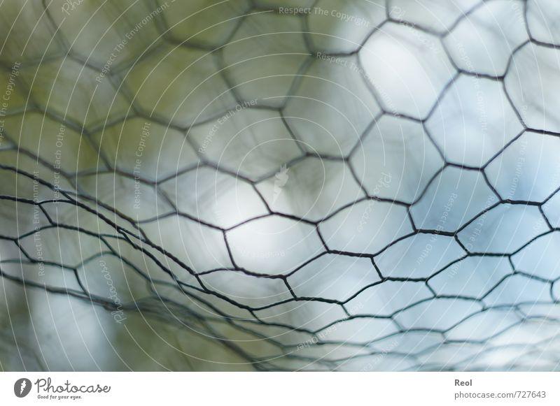 Hinter Gitter Gitternetz Zaun Maschendraht Maschendrahtzaun Draht Drahtzaun Drahtgitter grün Netzwerk netzartig Gehege Käfig geschlossen ausgeschlossen
