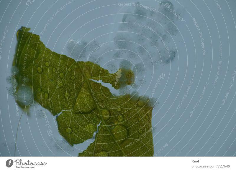 Im Hagel blau grün Pflanze Wolken Blatt dunkel grau Eis Regen dreckig Urelemente Frost Sturm Gewitter Grünpflanze schlechtes Wetter