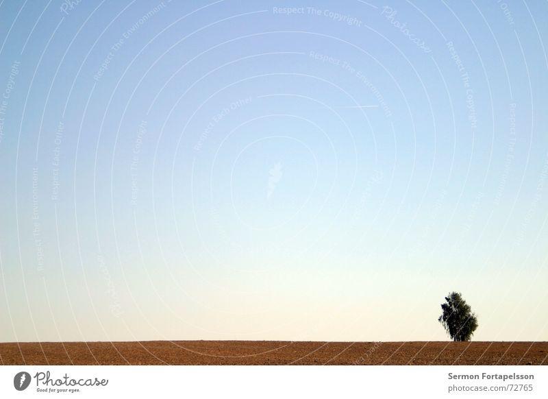 |---O Baum Wolken Feld Sommer Nachmittag Samstag Einsamkeit Landwirtschaft Wiese flach einzeln Horizont Himmel Wind Silhouette Skyline Amerika Ast Provinz