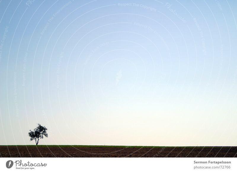 O---| Himmel Baum Sommer Einsamkeit Wolken Wiese Traurigkeit Horizont Wind Feld einzeln Ast Landwirtschaft Skyline Amerika flach