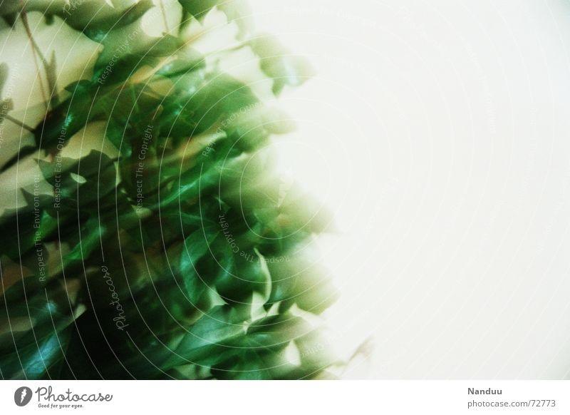 Efeu-Schlieren Alkohol Rauschmittel Raum Pflanze träumen Geschwindigkeit grün weiß Bewusstseinsstörung Zimmerpflanze Botanik Photosynthese white unsharp dream