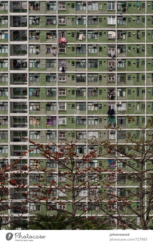 Platznot Stadt grün Baum Einsamkeit Haus Fenster Zusammensein Fassade Häusliches Leben trist Hochhaus Wachstum bedrohlich einfach Wandel & Veränderung