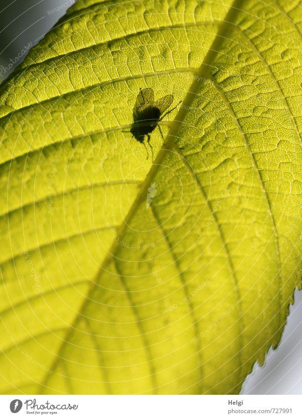 ich seh dich... Natur grün Pflanze ruhig Blatt Tier schwarz Umwelt Leben Frühling klein natürlich außergewöhnlich oben Zufriedenheit leuchten