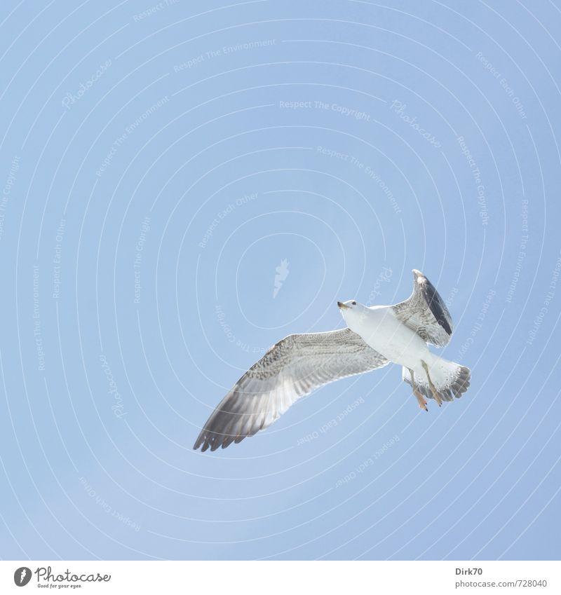 Überflieger Tier Himmel Wolken Schönes Wetter Marmarameer Istanbul Türkei Wildtier Vogel Möwe 1 fliegen Blick frei Unendlichkeit hell maritim natürlich oben
