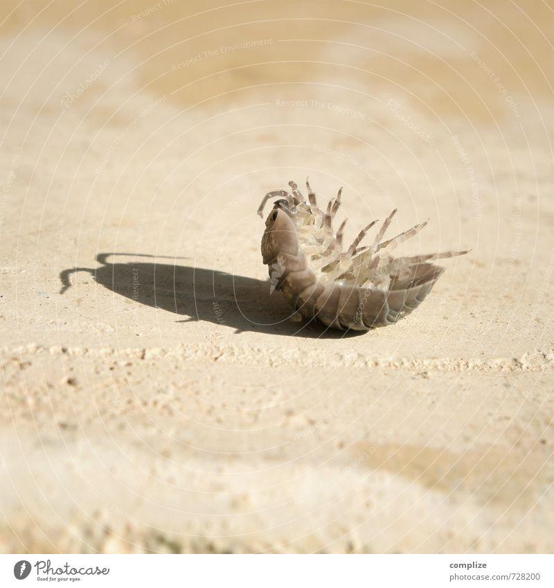 Ich hab Rücken Stein drehen krabbeln liegen exotisch gruselig Assel Kellerasseln Schädlinge Rückenlage Hilfesuchend Käfer rumasseln geassel Gemeine Küchenschabe