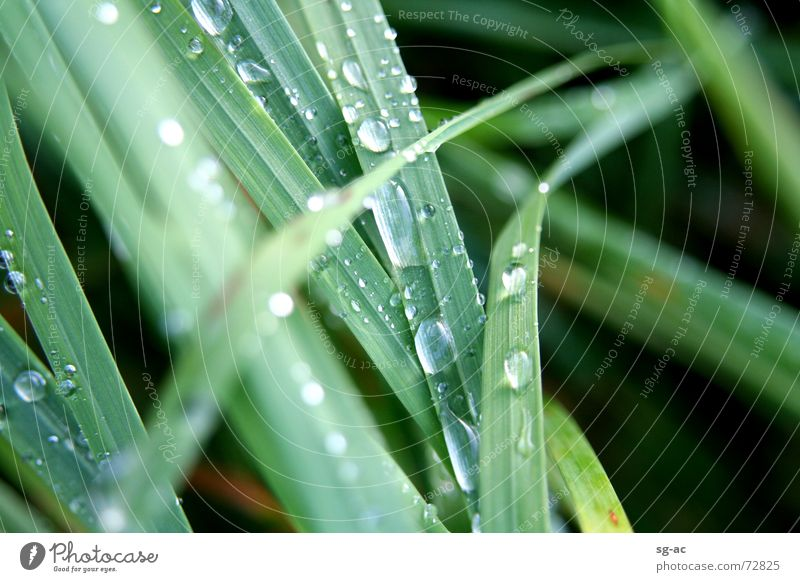 Nach dem Regen... Gras grün nass feucht Halm grasgrün Wasser Wassertropfen Seil Erde gress water grassgreen raindrops wet Natur