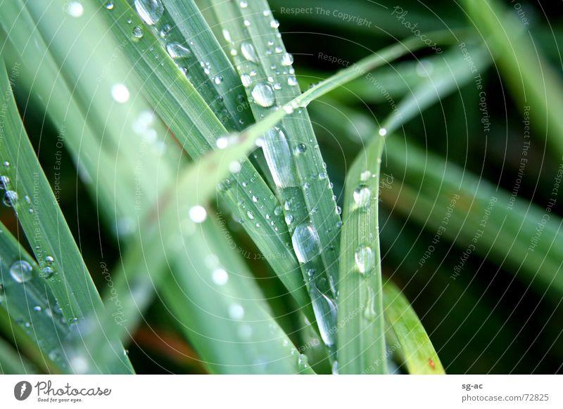 Nach dem Regen... Natur Wasser grün Gras Wassertropfen nass Seil Erde feucht Halm grasgrün