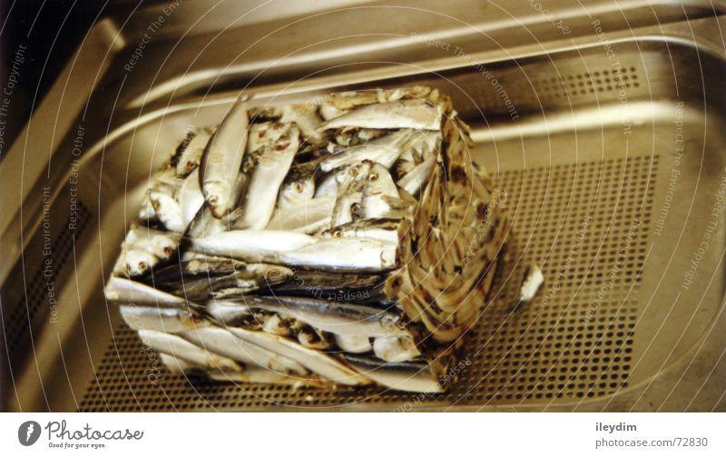 Fischblock Futter Küchenspüle Block gefroren Ernährung Zoo Bauernhof verdorben Geruch Rechteck eckig schön steril gepresst wirtschaftlich