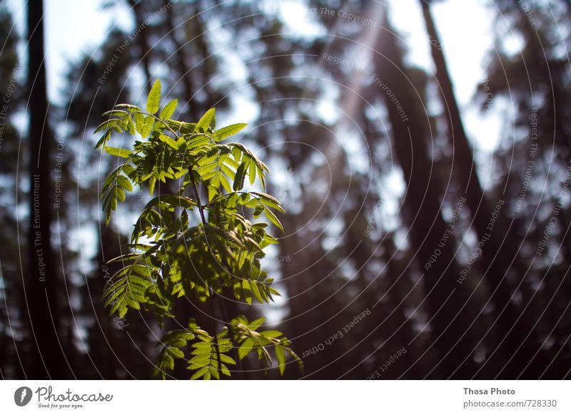 Gib mir Sonne Natur grün Sonne Baum ruhig Blatt dunkel Wald Leben Gras Erde träumen leuchten Sträucher weich Hoffnung