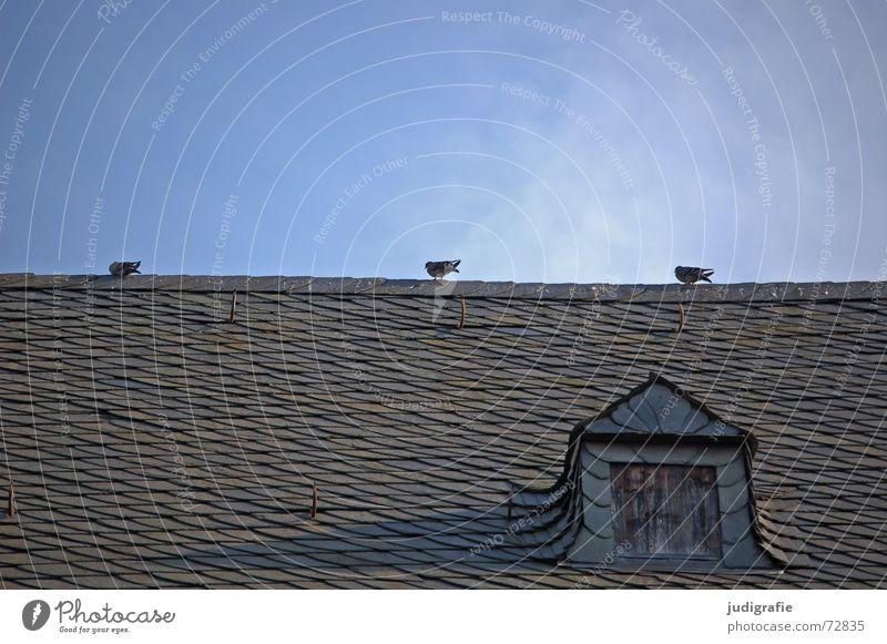Tauben auf dem Dach 3 Vogel Satteldach Dachfirst Wange Speiseröhre Deckung Haken Backstein Dachziegel ruhig Fenster Dachgaube Haus Gebäude Altbau Goslar