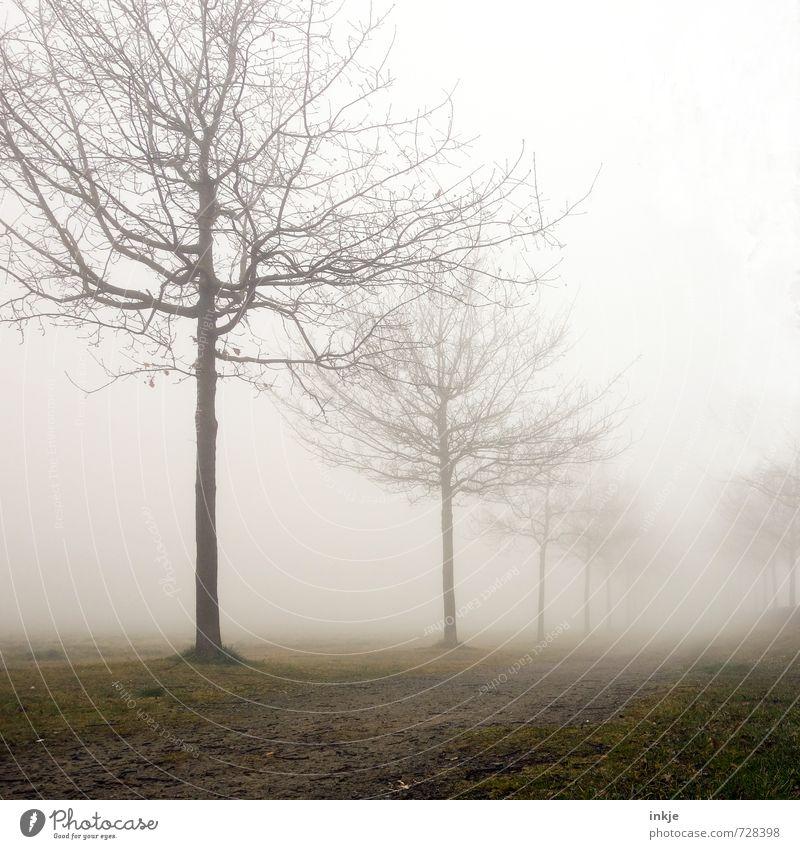 misty way to nowhere Himmel Natur Baum Einsamkeit Landschaft Winter dunkel kalt Umwelt Gefühle Herbst Wege & Pfade Frühling Stimmung Park Nebel