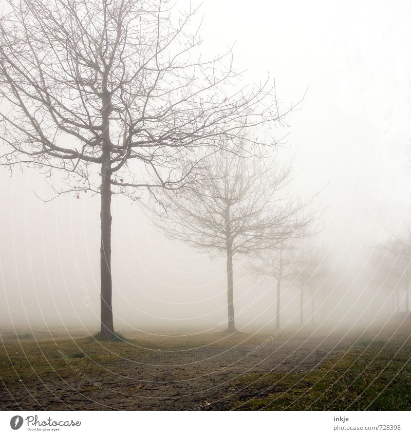 misty way to nowhere Umwelt Natur Landschaft Himmel Frühling Herbst Winter Klima schlechtes Wetter Nebel Baum Park Allee Fußweg Menschenleer Wege & Pfade stehen