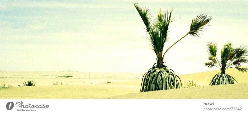 Wasser? Ferien & Urlaub & Reisen Ferne Sommer Pflanze Erde Sand Himmel Nebel Wärme Dürre Wüste Swakopmund groß heiß braun gelb grün Durst Namibia Afrika Palme