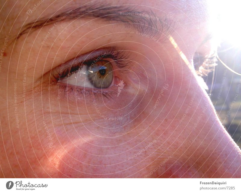Augenblitz Augenbraue Makroaufnahme Herbst Wimpern Frau Gesicht Nase Sonne hell reflektion Nahaufnahme Regenbogenhaut Blick