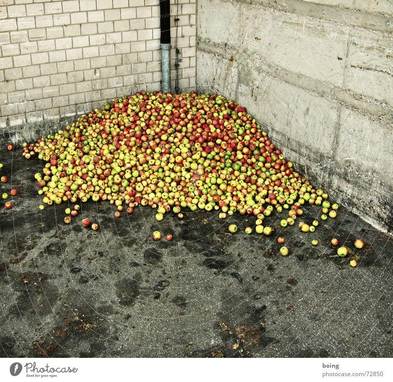 läßt sich anhand des Umgangs mit Lebensmitteln erkennen, wie wei Frucht Armut Güterverkehr & Logistik Müll Apfel Torte Appetit & Hunger Ernte Bioprodukte Respekt Biologische Landwirtschaft Ware demütig biologisch Lebensmittel Törtchen