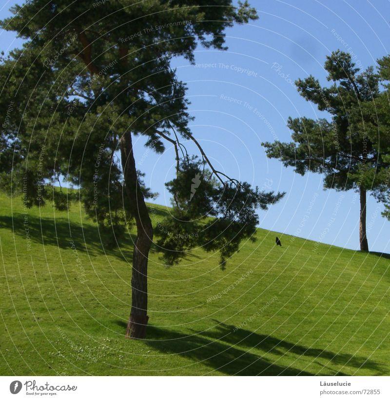 teletubbieland Wiese grün hell-blau Sommer Wolfsburg Vogel Baum Schatten Rasen