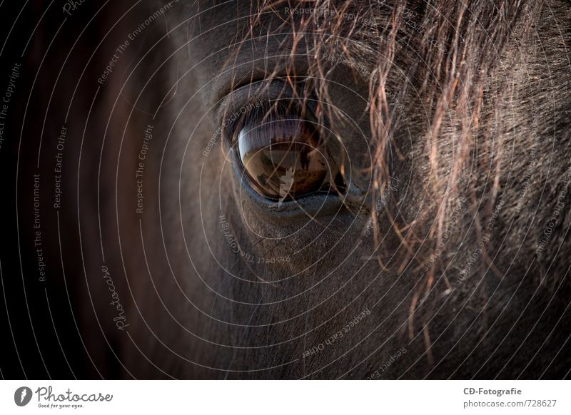 Pferdeauge Tier Kraft Zufriedenheit Kreativität Kontakt