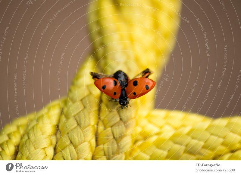 Marienkäfer auf Abflug Tier Käfer Flügel 1 hell natürlich niedlich schön Wärme gelb orange rot schwarz Frühlingsgefühle Warmherzigkeit Tierliebe Farbfoto
