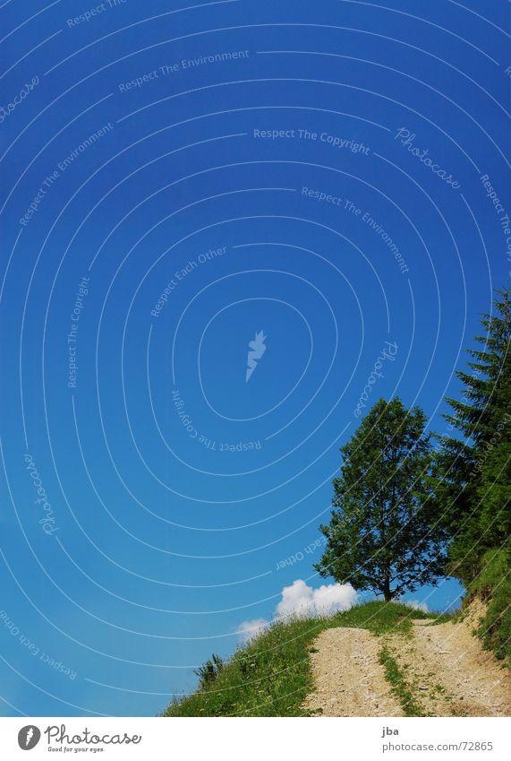 Berg bleibt Himmel Baum Blume grün blau Pflanze Wolken Straße Wiese Gras Stein Wege & Pfade fahren Ast Tanne Landwirtschaft