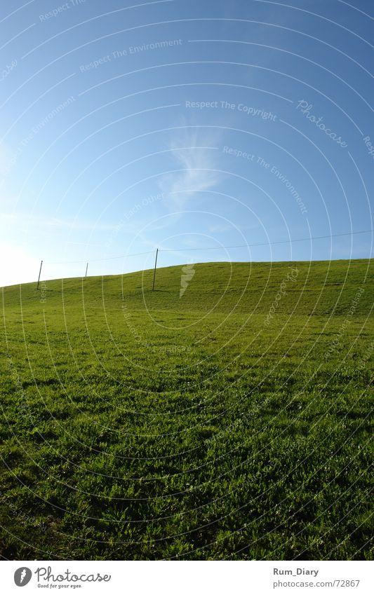 Unendlich Wiese Gras Landschaft Unendlichkeit tief