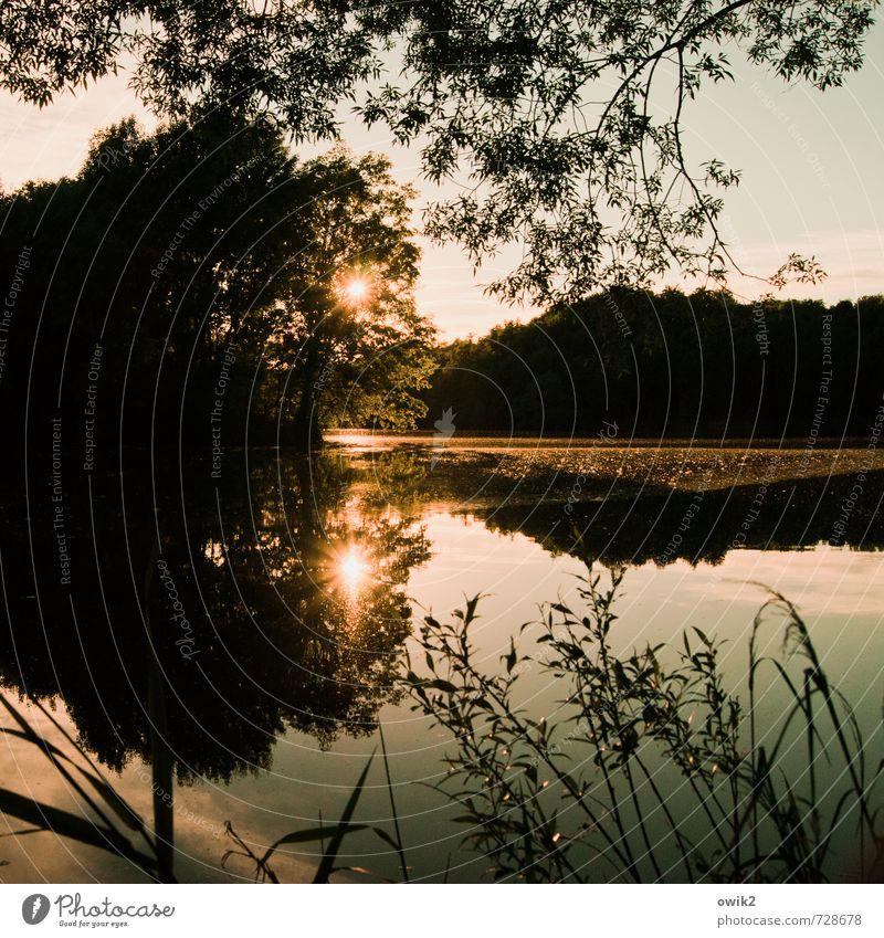 Licht vom Licht Umwelt Natur Landschaft Pflanze Wasser Himmel Klima Wetter Schönes Wetter Baum Sträucher leuchten glänzend groß ruhig Idylle Unendlichkeit Ferne
